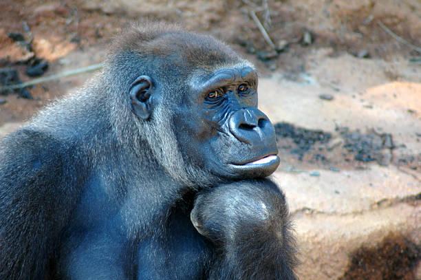 soñar con gorilas asesinos