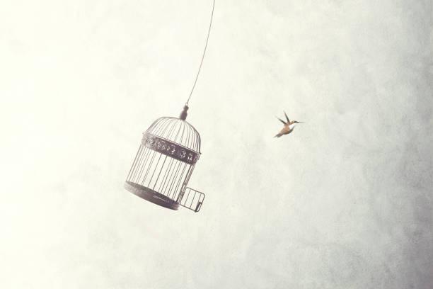 soñar con pájaro negro dentro de casa