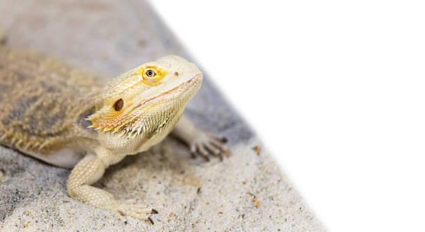 soñar con reptiles cocodrilos