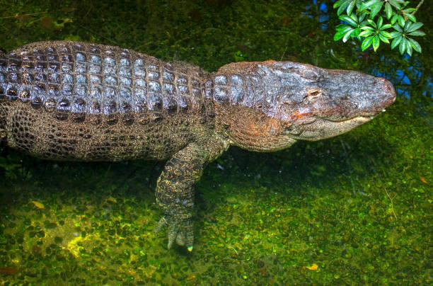 soñar con reptiles muertos