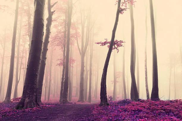 soñar con rosas de colores