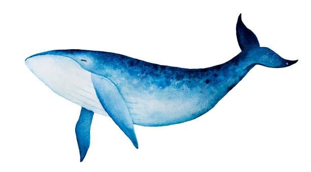 soñar con ballenas azules