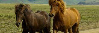 Soñar con un caballo