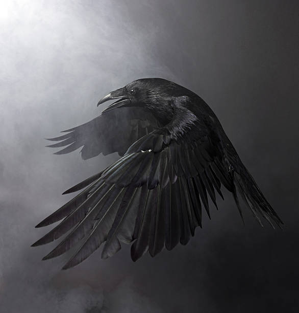 soñar con cuervos que me pican