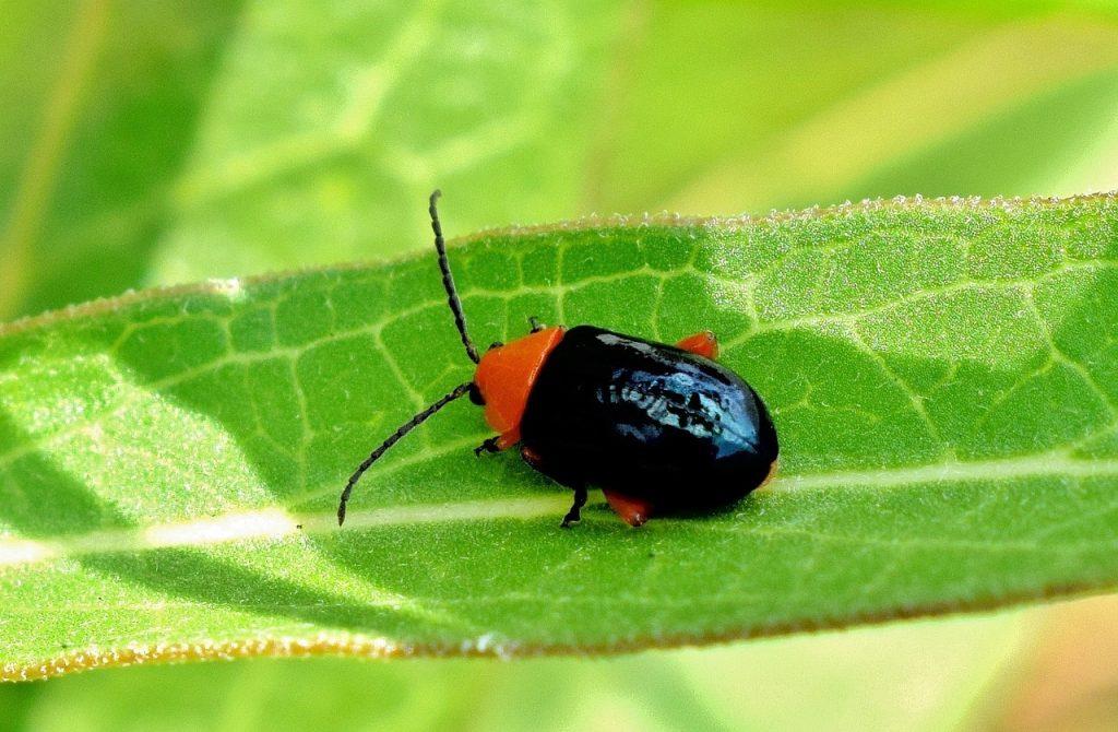soñar con escarabajos muertos