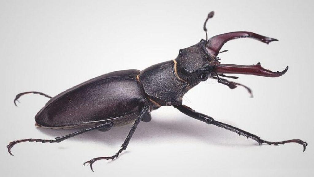 soñar con escarabajos rojos