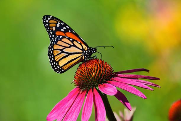 soñar con mariposas nocturnas