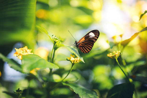 soñar con mariposas verdes