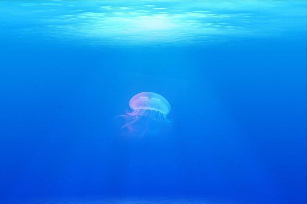 soñar con medusas gigantes