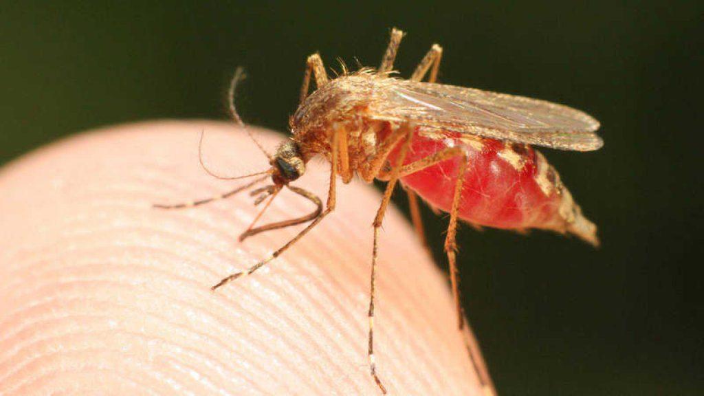soñar con mosquitos que te pican