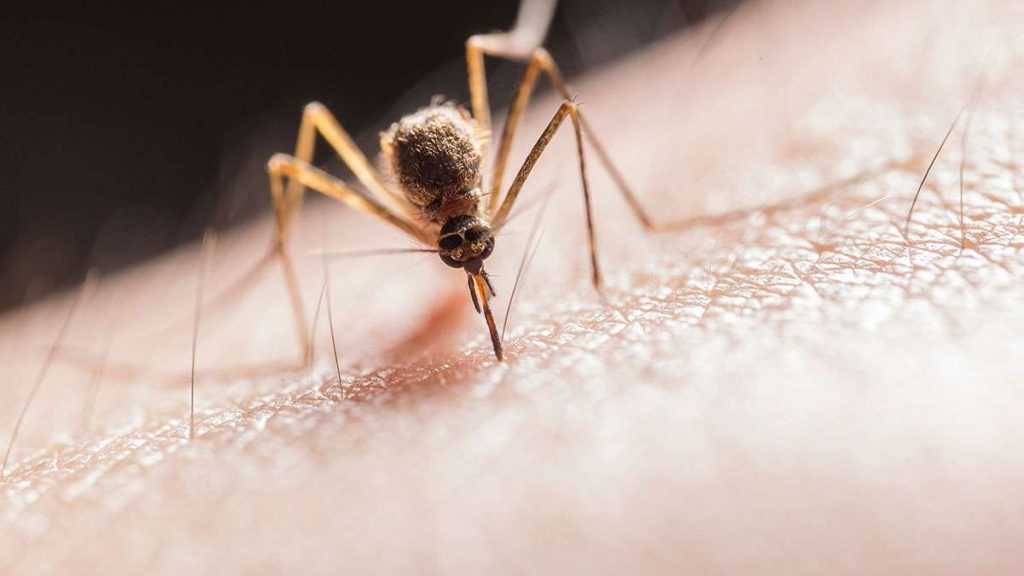 soñar con mosquitos brillantes