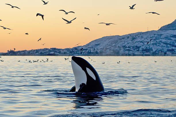 soñar con orcas volando