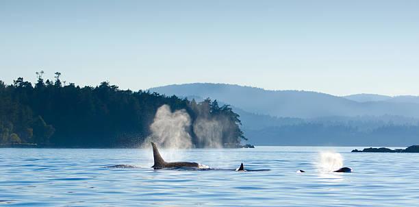 soñar con orcas varadas