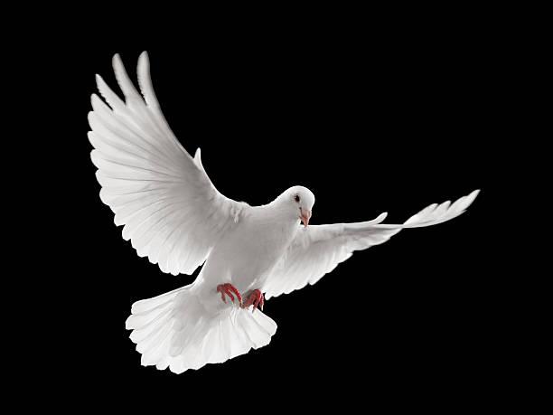 soñar con palomas blancas