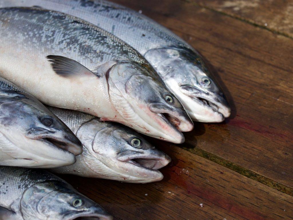 soñar con pescado crudo