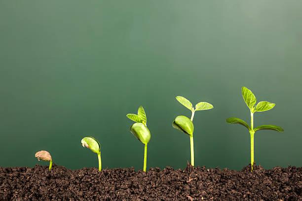 soñar con plantas verdes