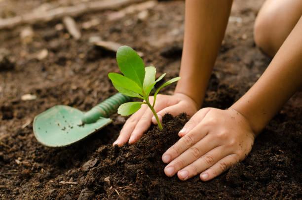 soñar con plantas marchitas