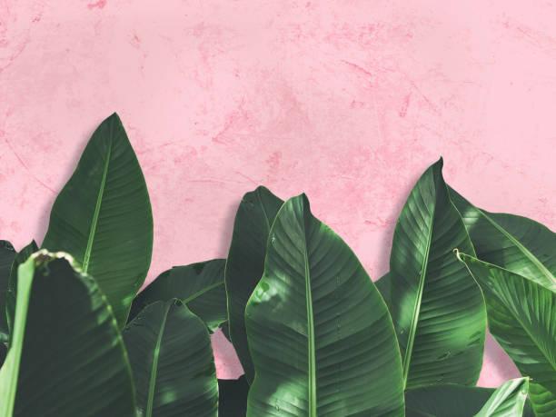 soñar con plantas que crecen