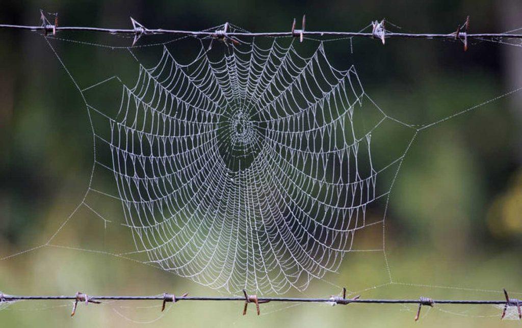 soñar con telarañas y arañas