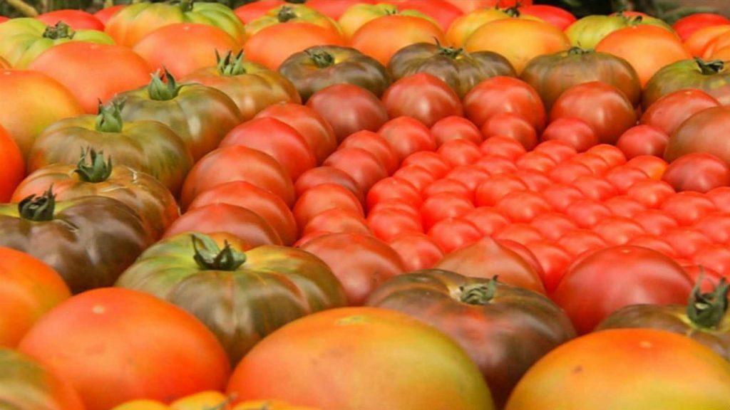 soñar con tomates grandes