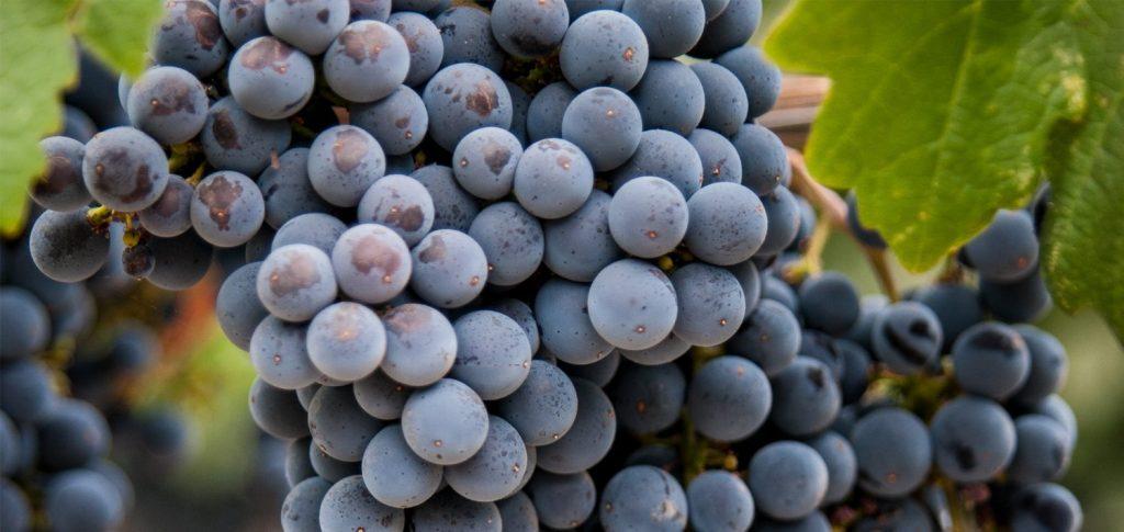 soñar con uvas negras