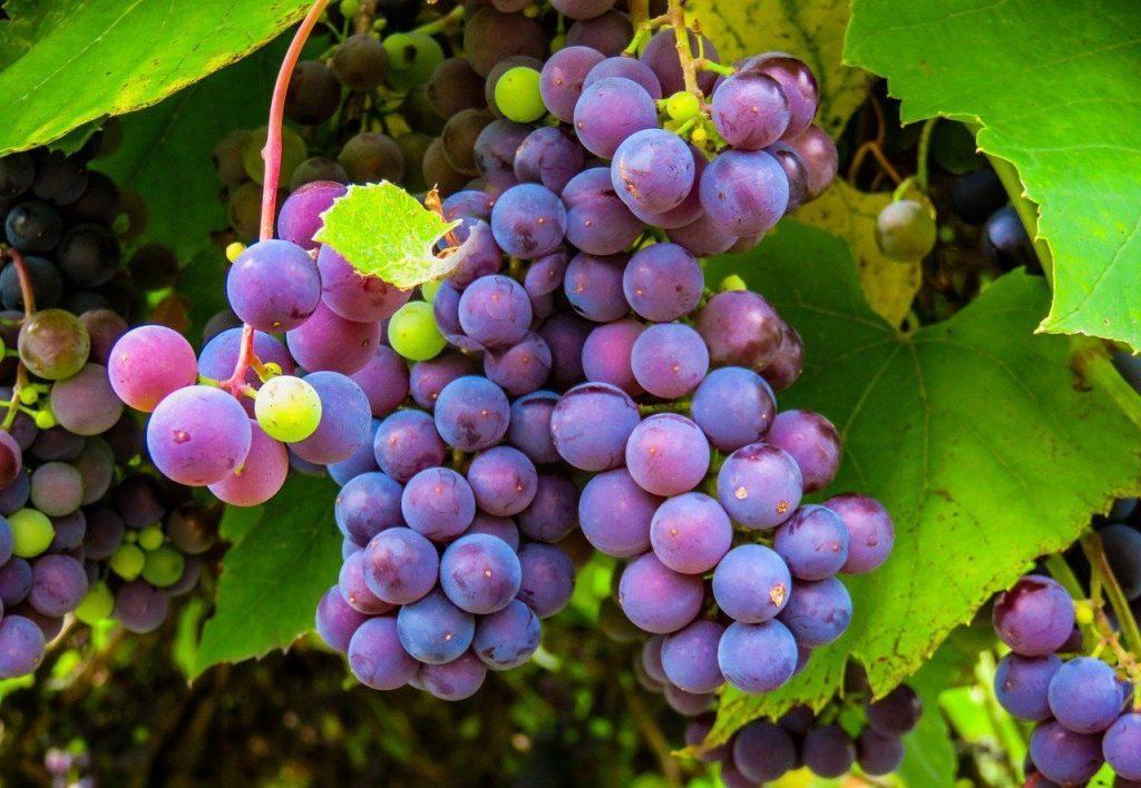 soñar con uvas blancas