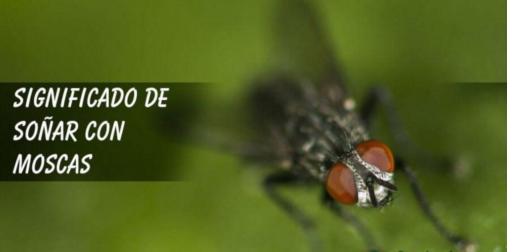 soñar con artas moscas