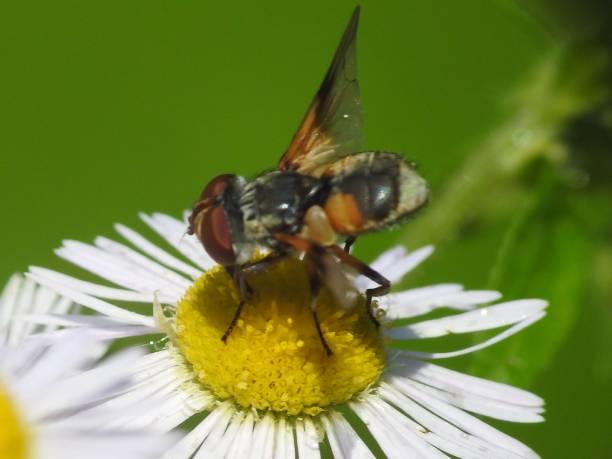 soñar con abejas en la cabeza