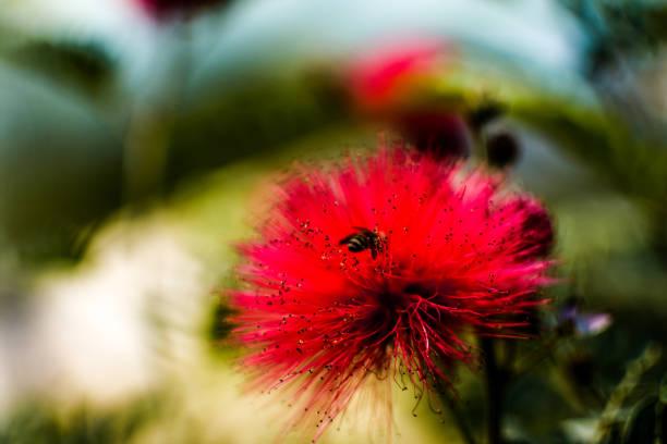 soñar con abejas en el cuerpo