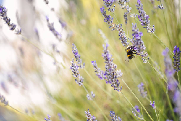soñar con abejas que te pican