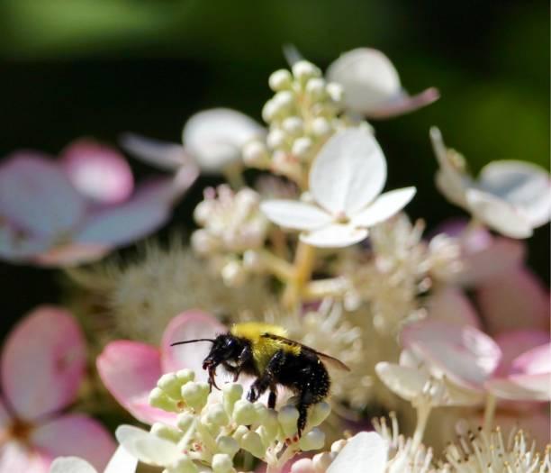 soñar con abejas y miel