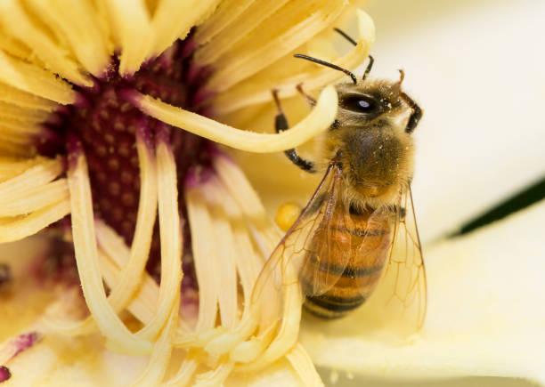 soñar con abejas amarillas
