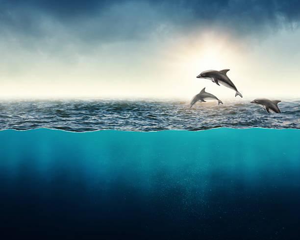 soñar con delfines blancos