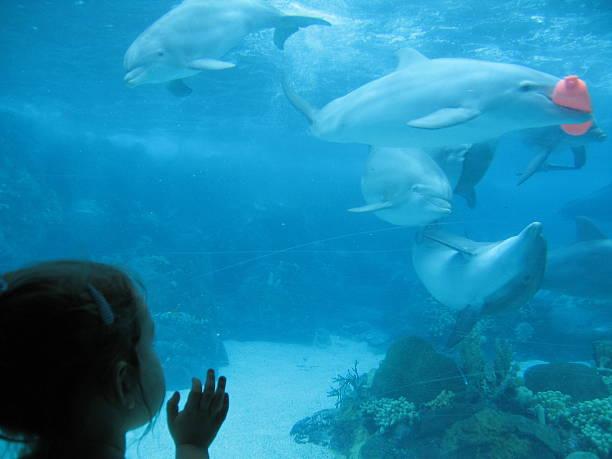 soñar con delfines y ballenas
