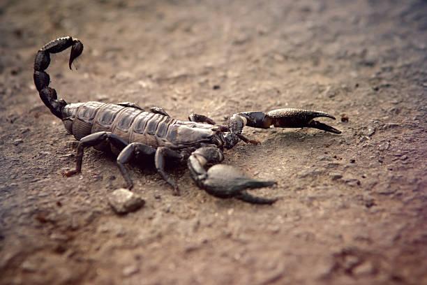 soñar con escorpiones azules