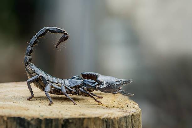 soñar con escorpiones muertos