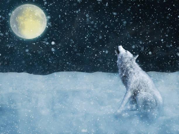 soñar con lobos marinos