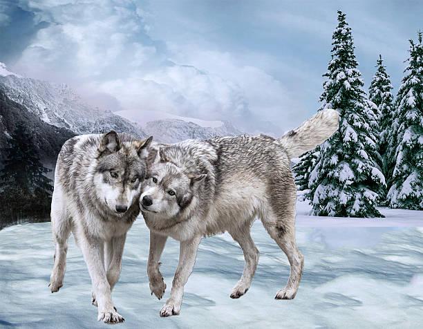 soñar con lobos cachorros