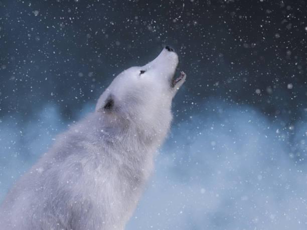 soñar con lobos y perros