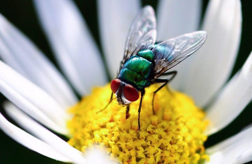 soñar a moscas