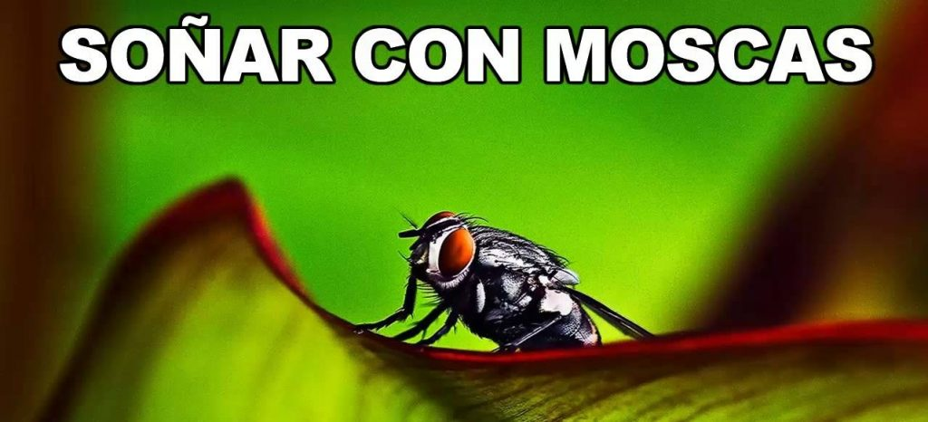 soñar con moscas negras