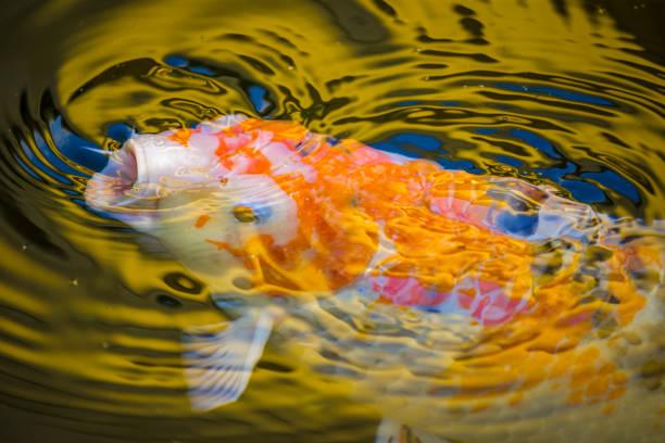 soñar con peces fuera del agua