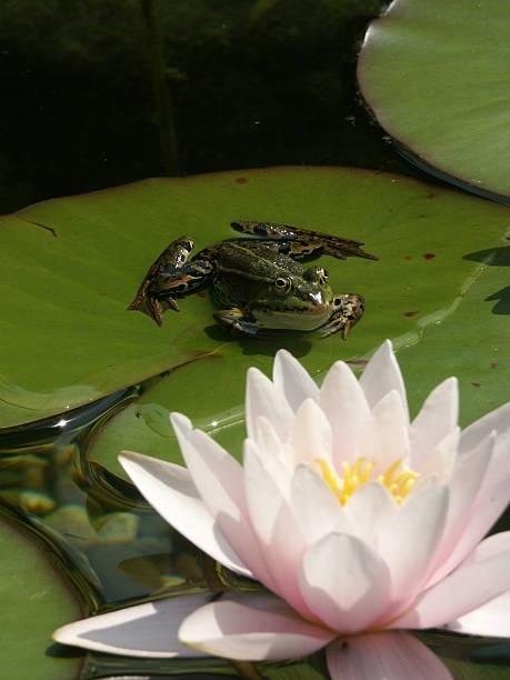 soñar con ranas que significa