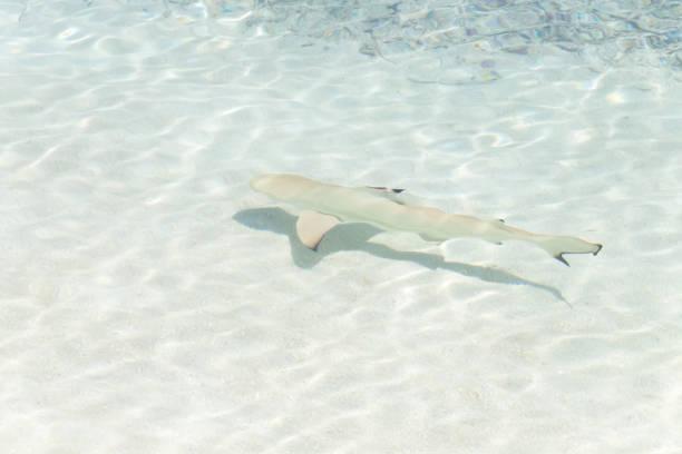 soñar con tiburones muertos