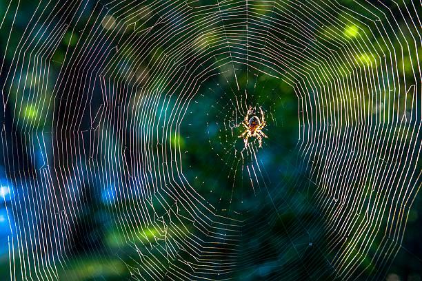 soñar con arañas pequeñas