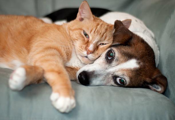 soñar con gatos que significa