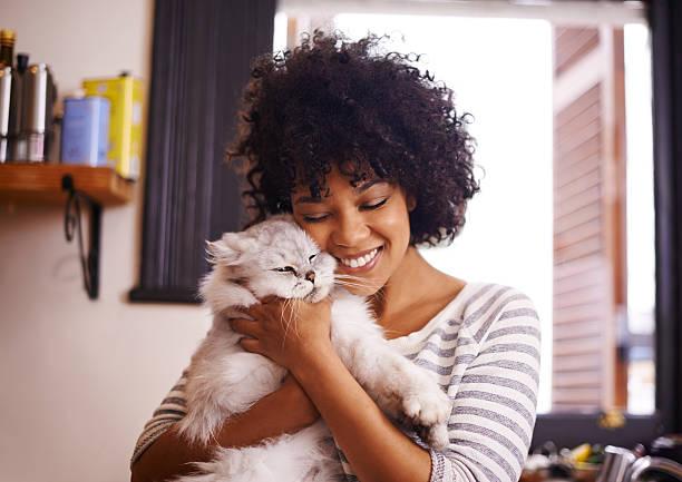 soñar con gatos blancos