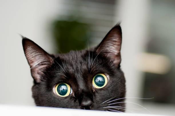 soñar con gatos y ratones