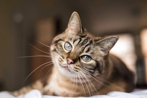 soñar con gatos que te muerden