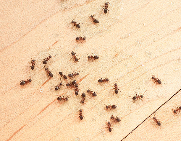 soñar con hormigas en el cuerpo